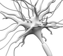 synaps